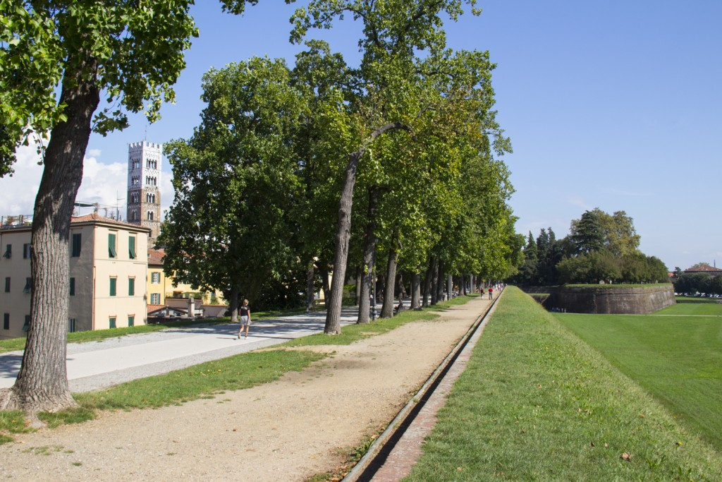 Tree-lined boulevard on the walls of Lucca in Tuscany in Italy